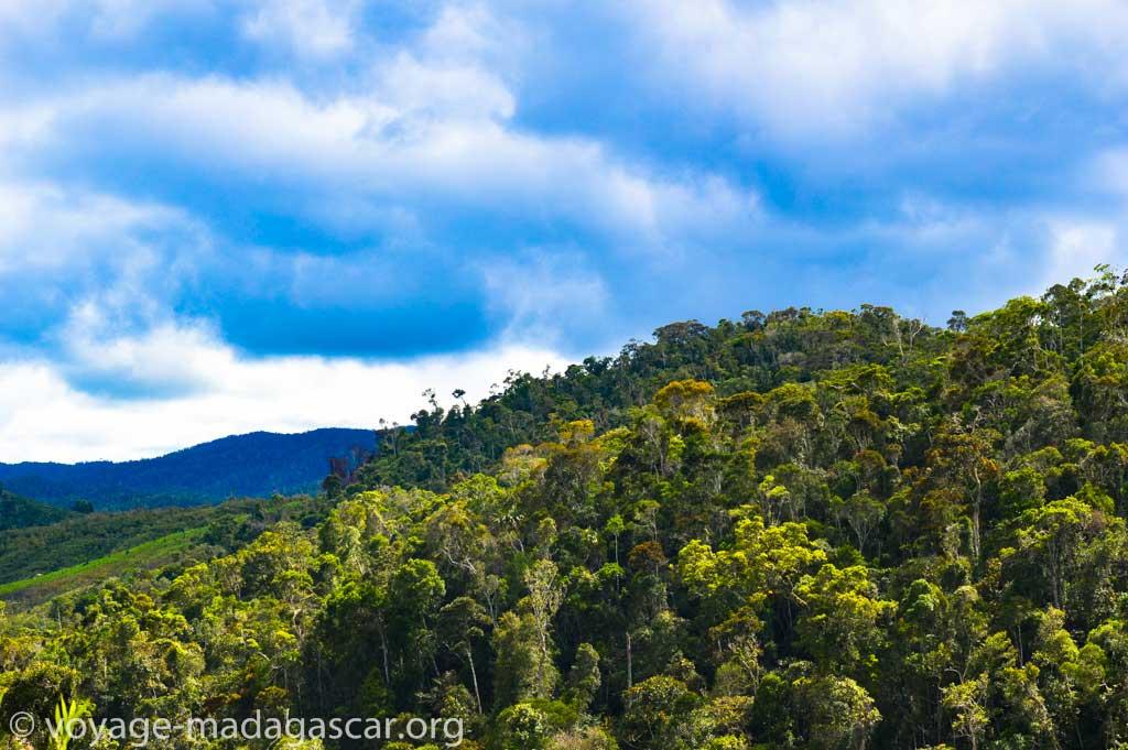 Couverture forestière d'Andasibe