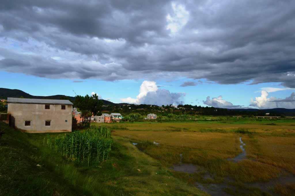 Dans les milieux ruraux les rizières à perte de vue sont devenues jaunes