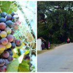 Fianarantsoa destination pour amateur de vin