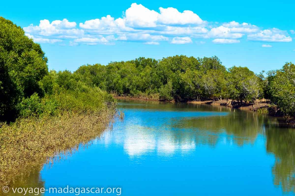 Foret de mangrove dans un parc