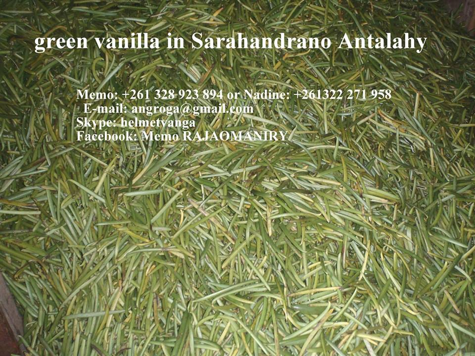 Green Vanilla in Madagascar