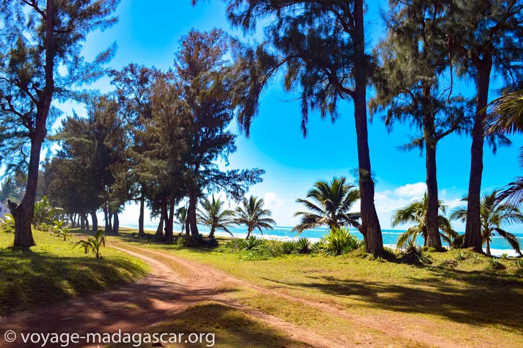 Panorama d'une jolie plage de sable fin avec ses cocotiers