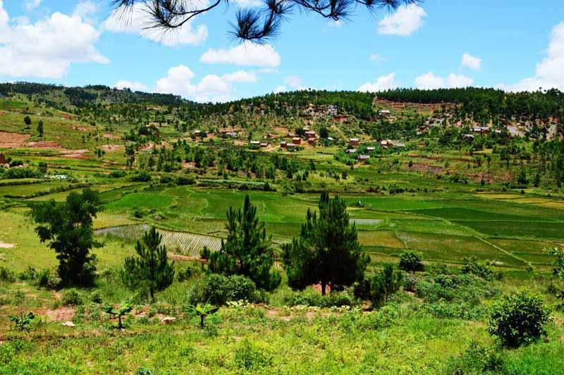 Le riz est l'aliment de base des Malagasy