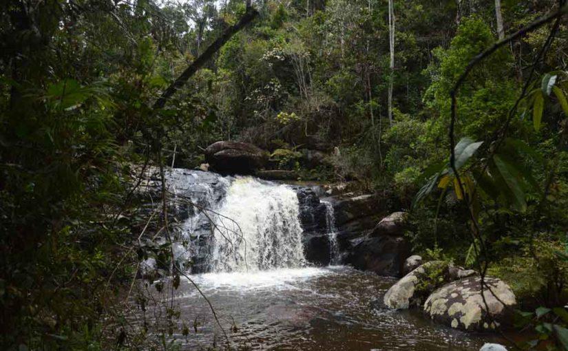 Parc Iaroka Andasibe