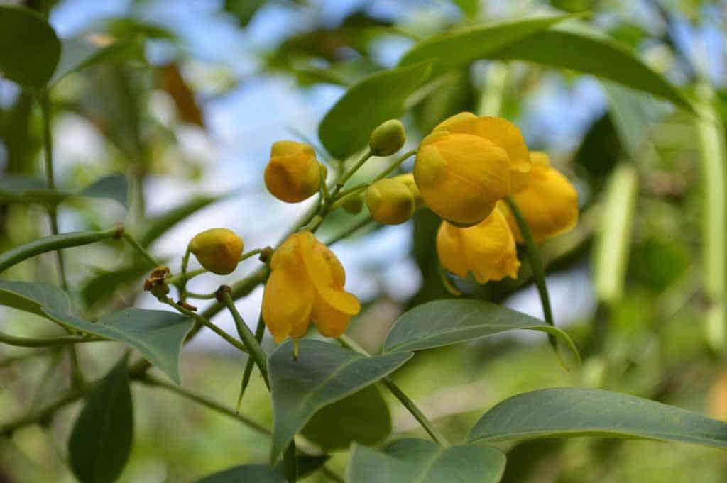 Plantes de Madagascar