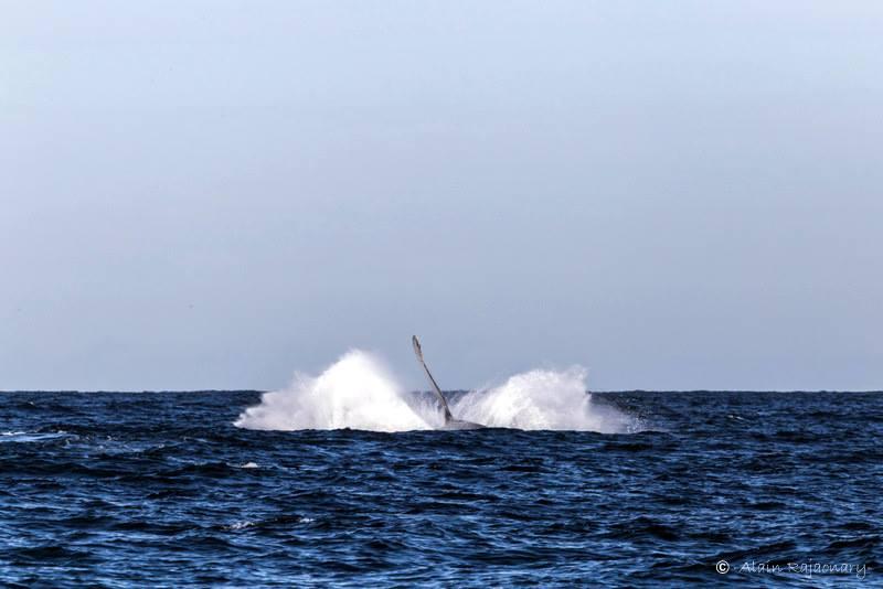 Rendez-vous avec les baleines de Sainte-Marie