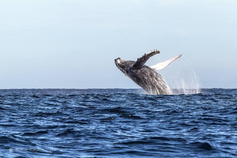 Spectacle des baleines à sainte Marie