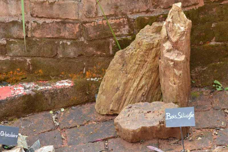 bois silicifiés de Madagascar