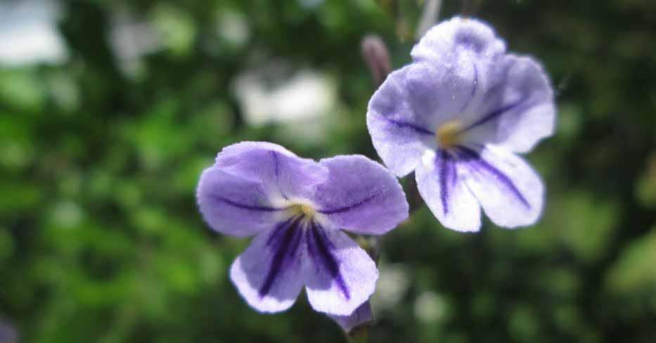 Fleurs précieuses de Madagascar
