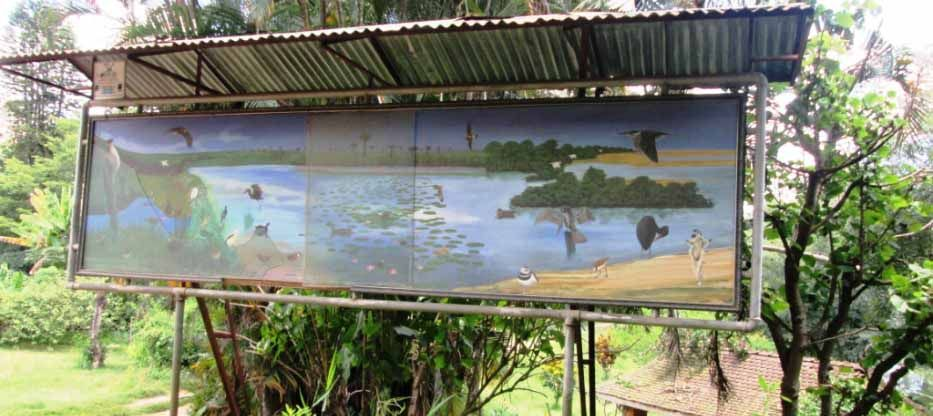 Les parcs nationaux de Madagascar