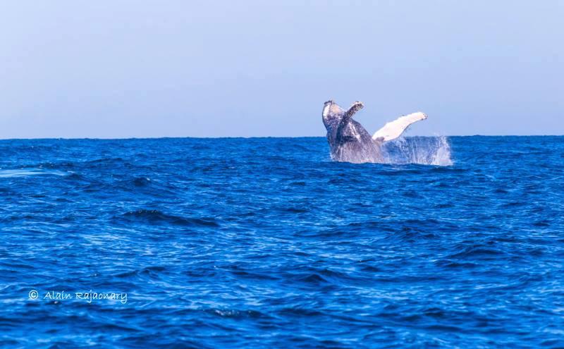 Rencontre avec un baleine sur l'île sainte marie